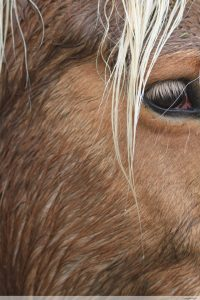 photos animalières drôme jj bertin.fr 2019 cheval
