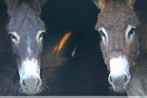 photos animalières drôme jj bertin.fr 2019 âne