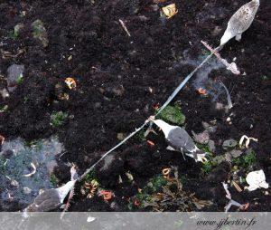 photos animalières drôme jjbertin.fr 2019 goéland