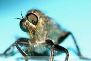 photos animalières drôme jjbertin.fr 2019 insecte