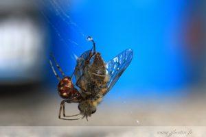 photos animalières drôme jjbertin.fr 2019 insecte araignée