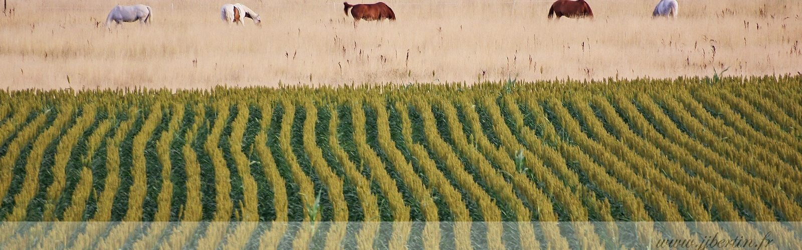photos animalières drôme jjbertin.fr 2019 paysage avec chevaux