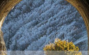 photos animalières drôme jjbertin.fr 2019 paysage col de la bataille