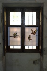 photos animalières drôme jj bertin.fr 2019 exposition palais delphinal saint donat 2018