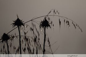 photos animalières drôme jj bertin.fr 2019 paysages herbes