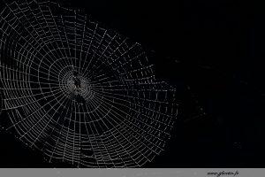photos animalières drôme jj bertin.fr 2019 paysages toile d'araignée