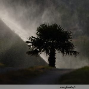 photos animalières drôme jj bertin.fr 2019 paysage palmier